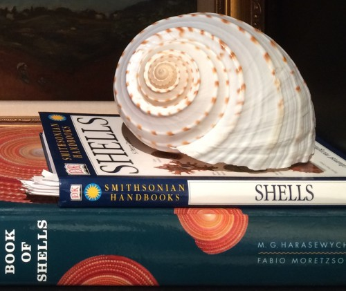 Shell and books